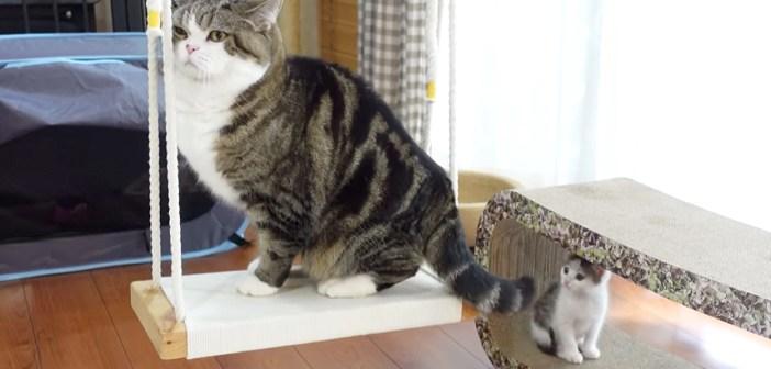 ブランコのお手本を見せる猫