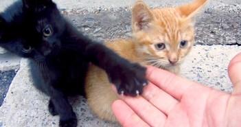 コンクリートの隙間に住んでいる子猫達