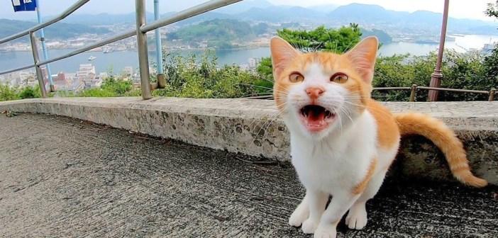 何かを訴えかけてくる猫