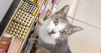 スーパーで出会った猫