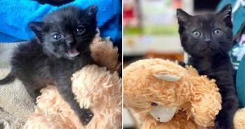 子猫とテディーベア