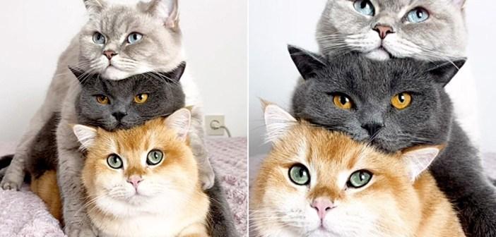 積み重なる猫