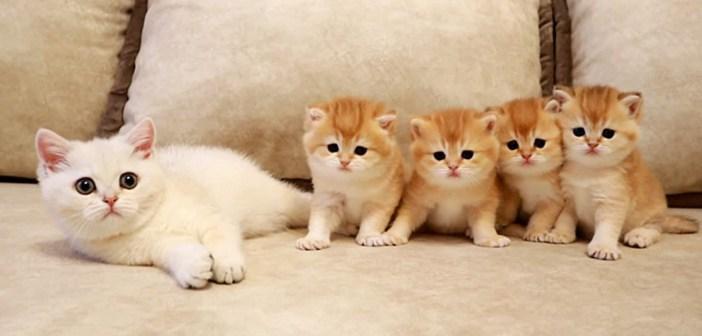 初対面の子猫達