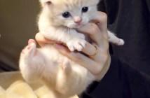 捕獲された子猫