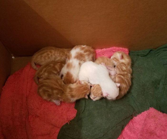生まれた子猫達