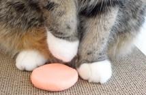 手形をとる猫