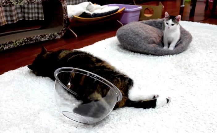 倒れた猫と子猫