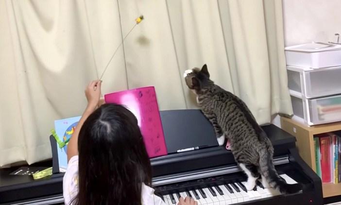女の子と一緒に遊ぶ猫
