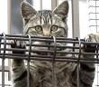 柵を越える猫