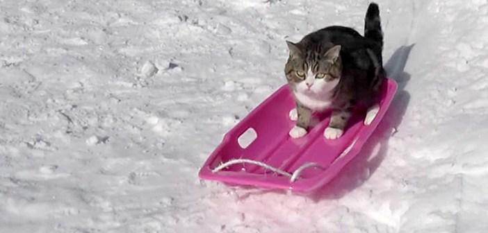 ソリに乗る猫さん