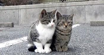 寄り添う子猫達