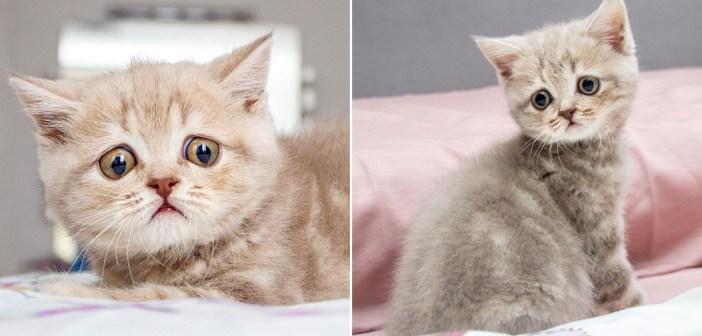 心配そうな目をした子猫