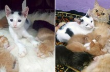 猫の親子に出会った迷子の子猫
