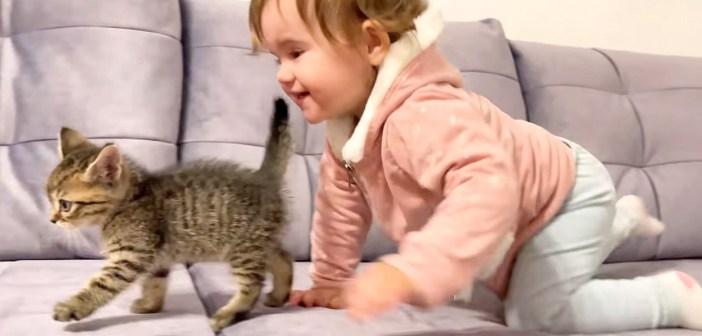 子猫と遊ぶ女の子