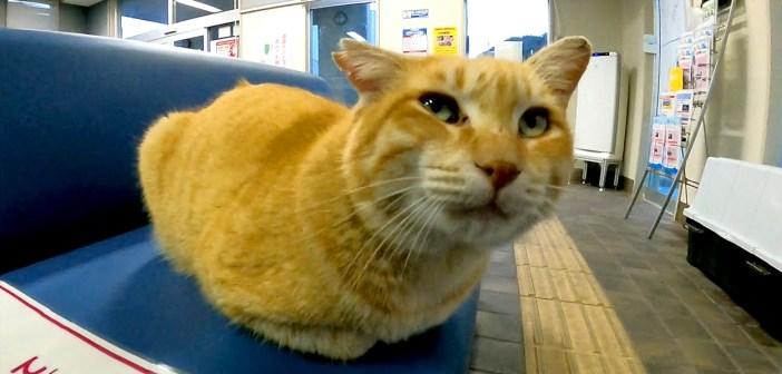 待合室の猫