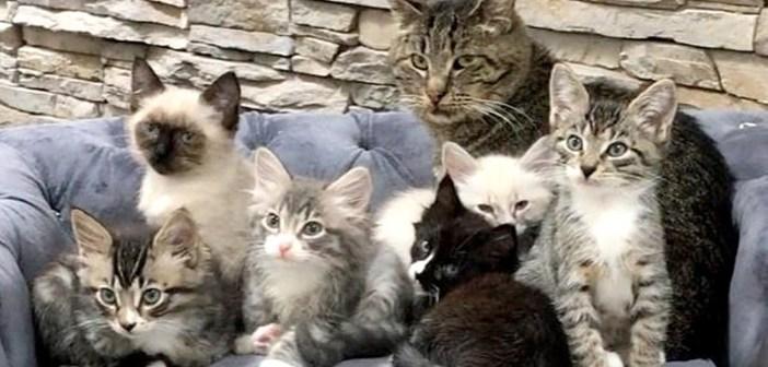 老猫と子猫達