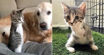 2本足の子猫