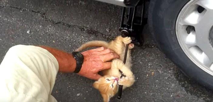 タイヤ交換のお手伝いする子猫