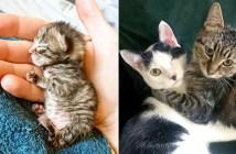 子猫と友達
