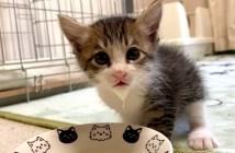 ミルク髭の子猫