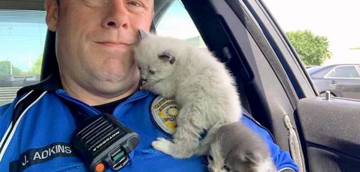 警察官に助け出された子猫達