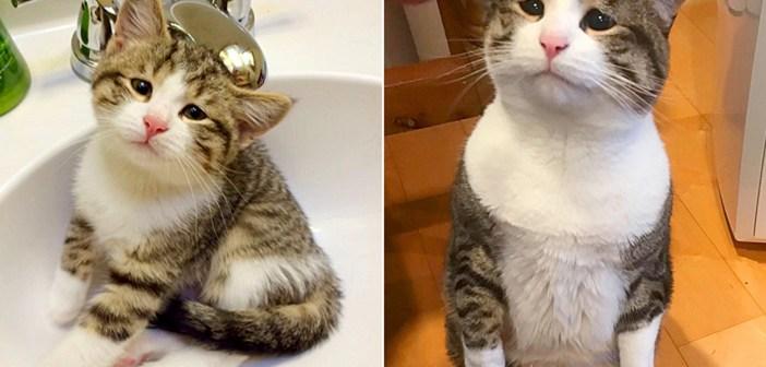 悲しそうな瞳の猫