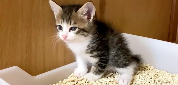 トイレ練習中の子猫