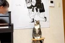 女の子の言いなりになる猫