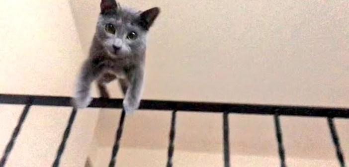 突撃してくる猫