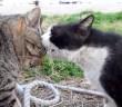 口喧嘩をする猫