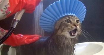 シャンプーハットをかぶる猫
