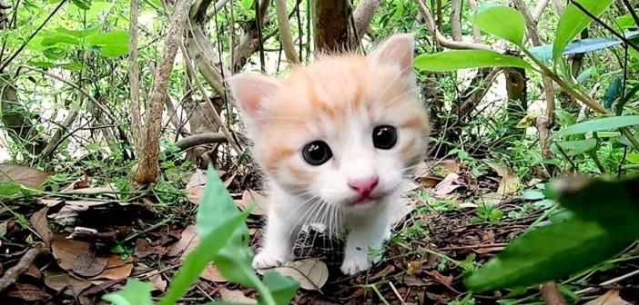 興味津々の子猫