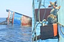 沈没した船から助け出された子猫達