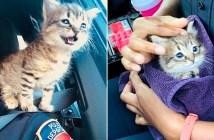 警察官に保護された子猫