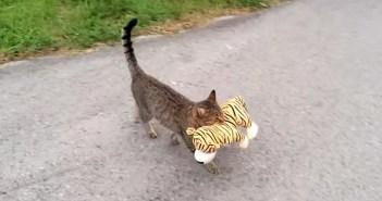 ヌイグルミを運ぶ猫