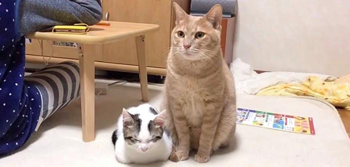 寄り添う猫達