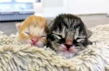 生まれたばかりの子猫達