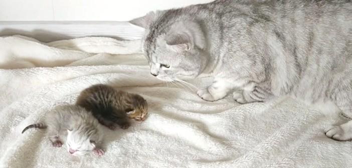 子猫達が気になる父猫