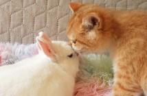 仲良しな子猫とウサギ