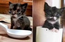 スプーンほどの大きさの子猫