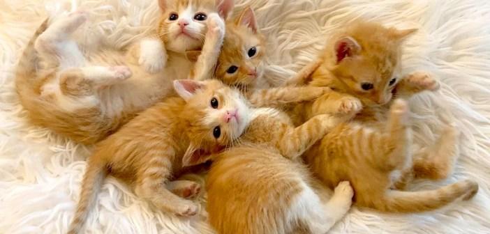 保護された4匹の子猫達