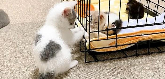 赤ちゃん猫達と子猫達