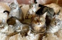 猫と保護子猫