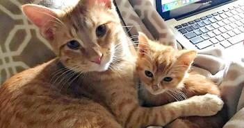 子猫のお父さんになった先住猫