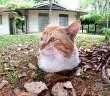地面から生えてきた猫