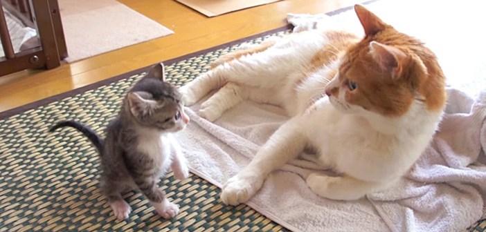 生まれてすぐに保護されて、優しい家族と一緒に暮らし始めた迷子の子猫。1ヶ月間の成長の様子に心がポカポカ温まる♡