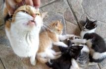 友達になった猫