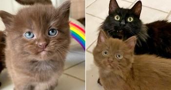 保護された母猫と子猫