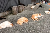 寝転がる猫達