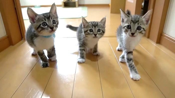 廊下を探索する子猫達